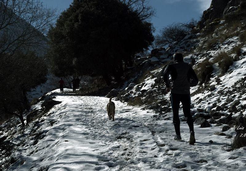 cerezo nieve