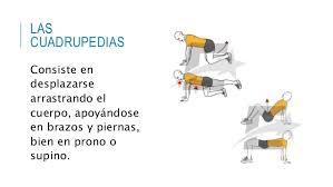 cuadrupedia-2